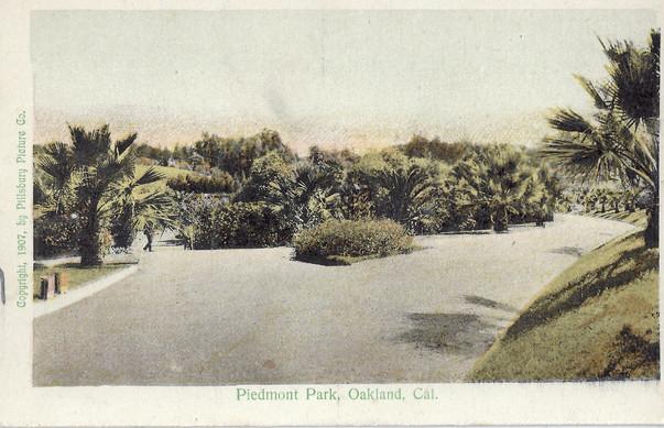 Postcard - Piedmont Park- Palms - 1907.j