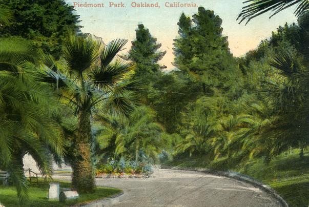 Postcard - Piedmont Park- Palm Pathway4.