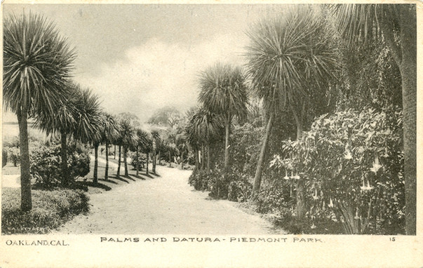 Postcard - Piedmont Park - Palm Drive -