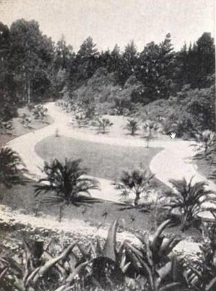 Postcard - Piedmont Park- Palm Pathway 2
