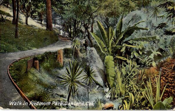 Postcard - Piedmont Park- Palm Pathway5.