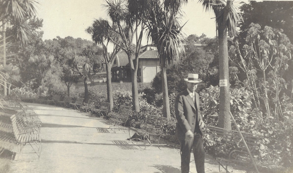 Postcard - Piedmont Park- Palm Pathway -