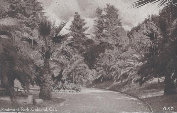 Postcard - Piedmont Park - Palms 2.jpg
