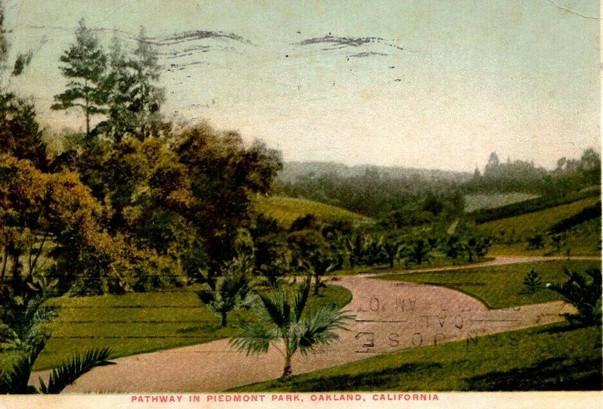 Postcard - PIedmont Park - Palm Pathway