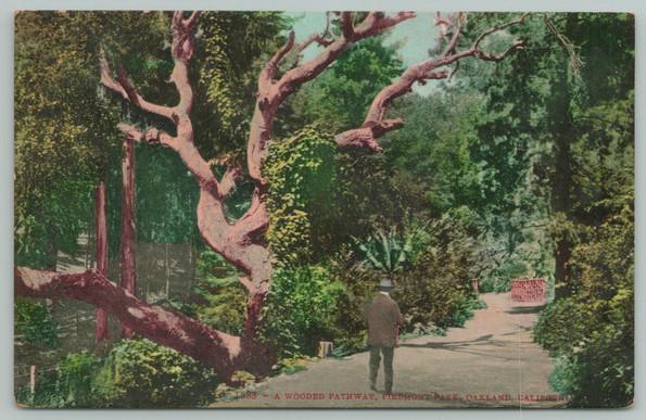 1 postcard - wooden pathway.jpeg