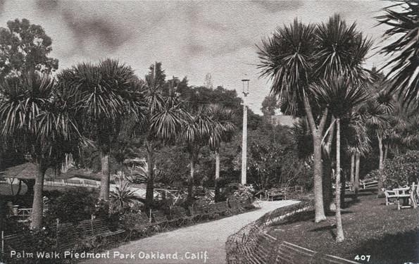 Postcard - Piedmont Park- Palm Pathway a