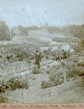 Postcard - Piedmont Park - Man in the Ma