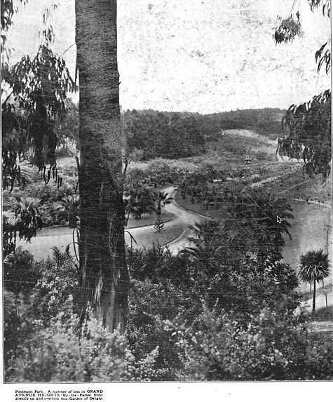 Postcard - Piedmont Park- Palm Pathway t