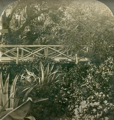 bridge in piedmont park 2.jpg