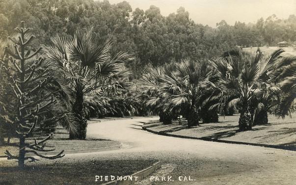 Postcard - Piedmont Park- Palm Pathway2.