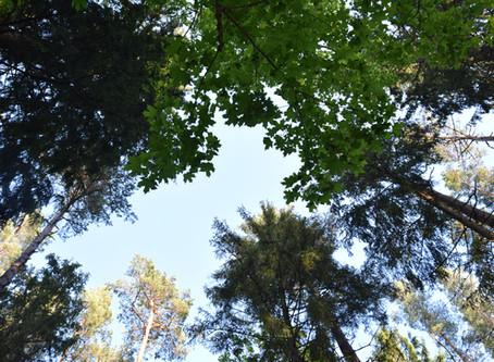 Metsaoskuste koolitus juba oktoobris!