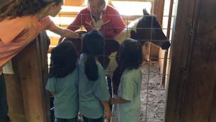 New pony and Adventurers