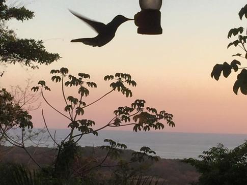Amazing hummingbirds