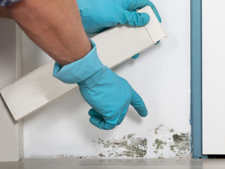3 Signs You May Have Mold in Your Home