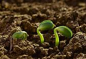 encuentro-nacional-agroecologia-950x0-c-