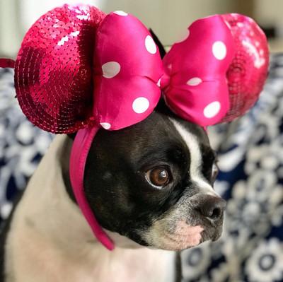 Disney aceita cães em hotéis do complexo