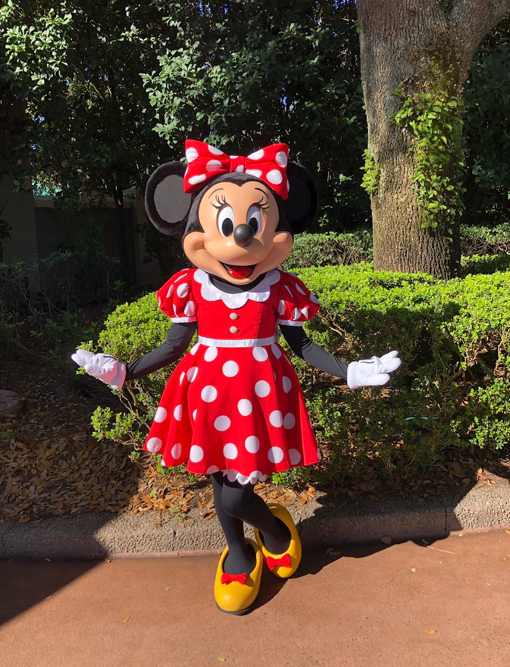 Reabertura dos parques Disney