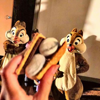 Chip and Dale Campfire: fogueira com Tico e Teco na Disney