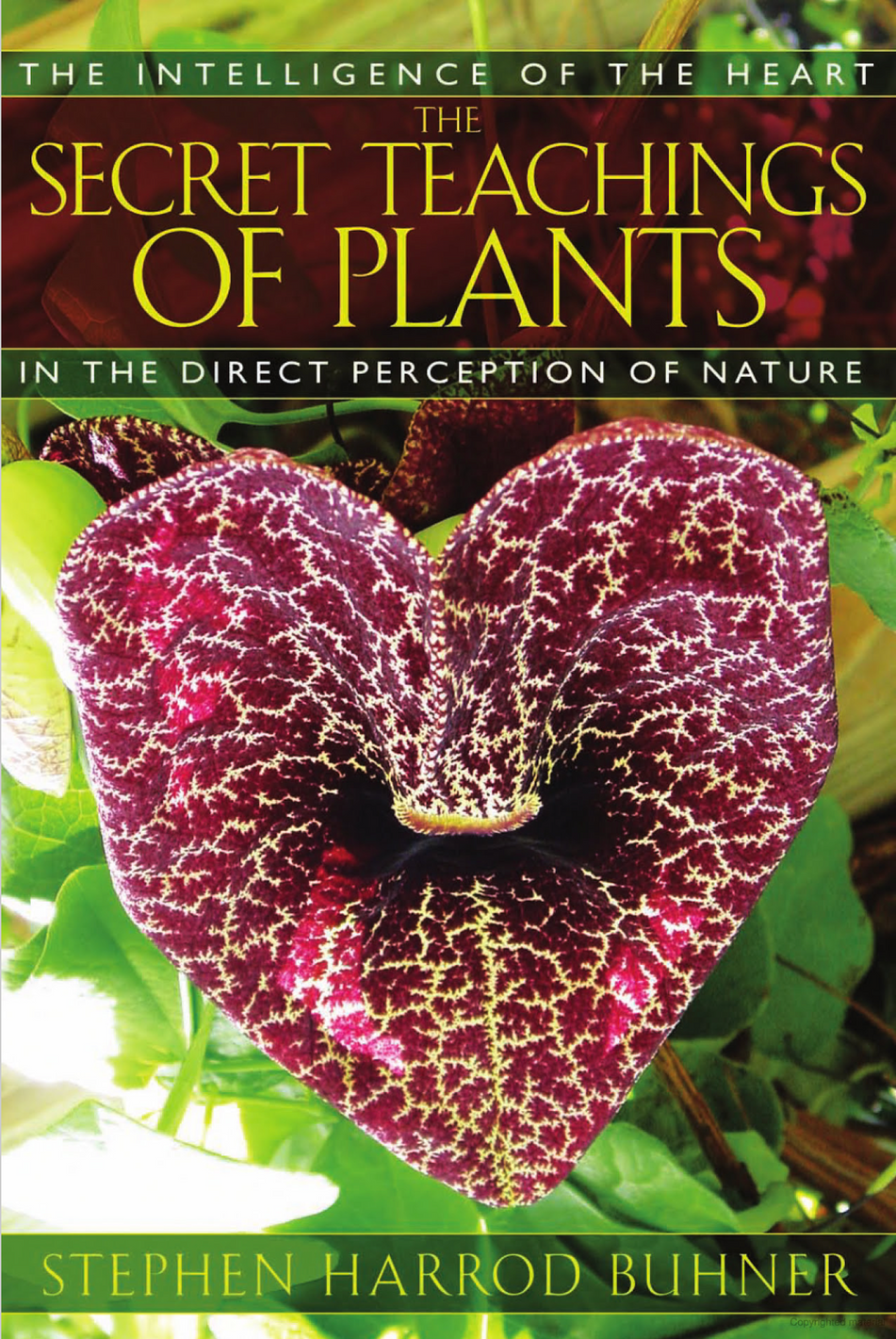 Recommended Reading - The Secret Teaching of Plants