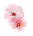 single flower transparent.png