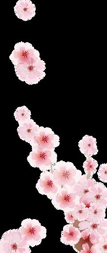 transparent blossoms 2.png