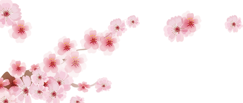 cherry blossom background.png