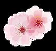 single flower transparent.png