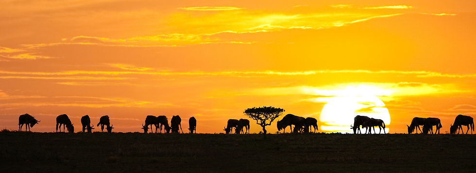travelling-tanzania-tours-and-trips-in-t