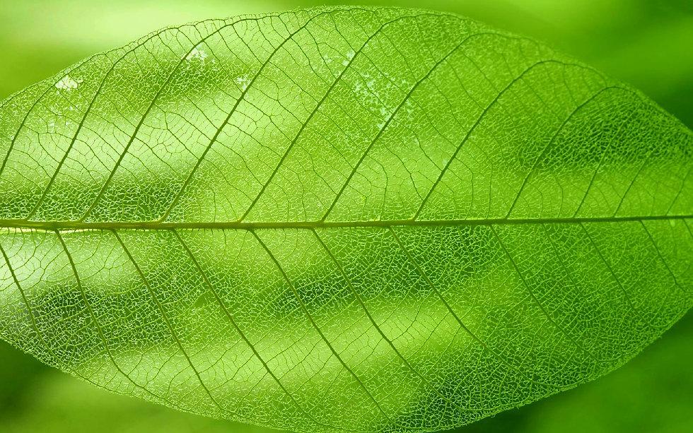 leaves_texture4960_edited.jpg