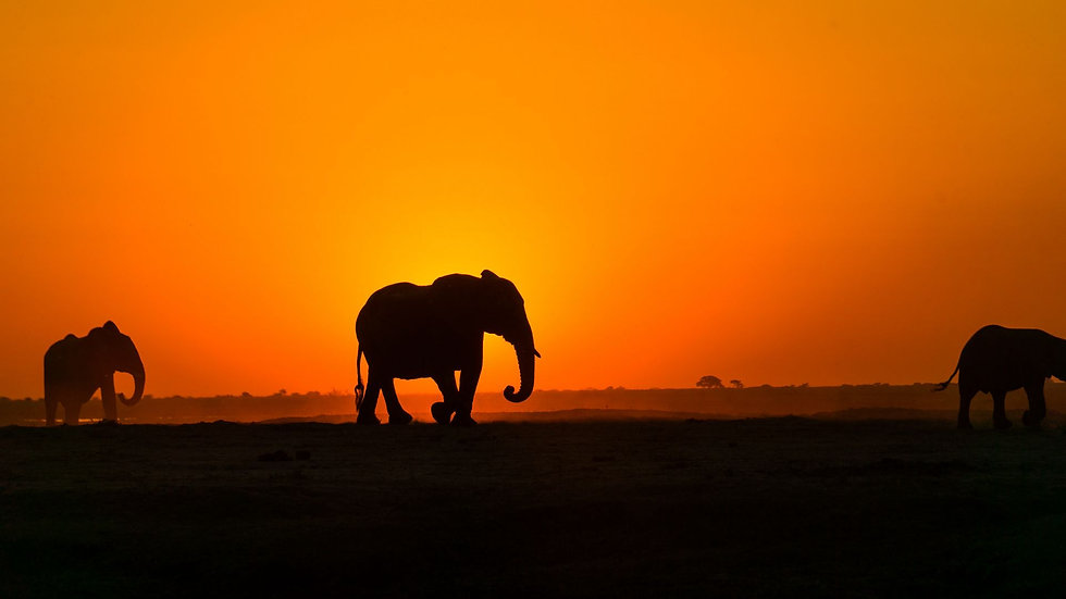 elephant_sunset_silhouette_162313_1920x1