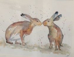 hares paired