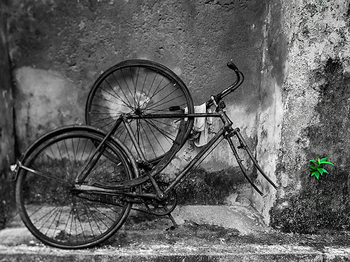 Peter DR Whelan - Rusty Bicycle