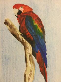 Polly by Carolyn Tucker