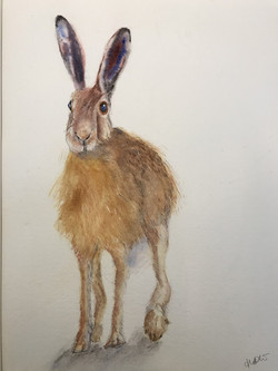 Lonely Hare by Hilary Williams