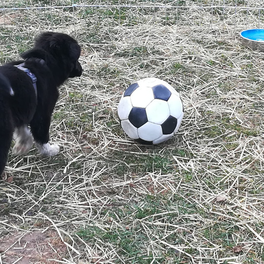 Mein Fußball. Heute sieht der nicht mehr so aus!