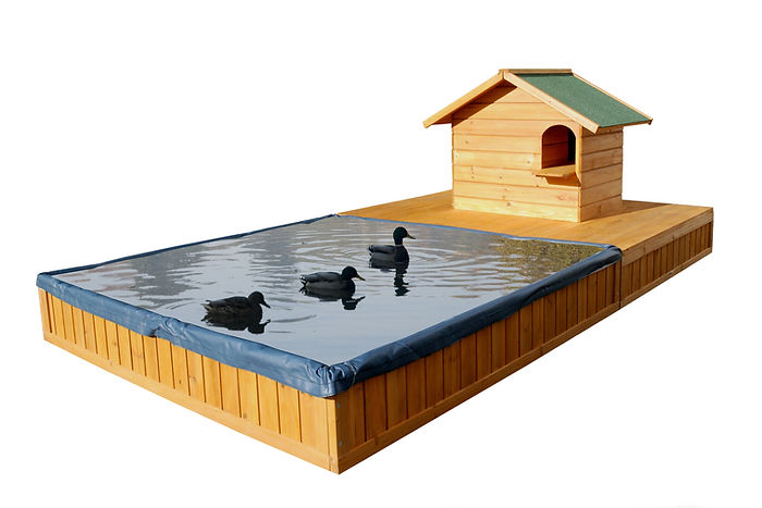 bassin-pour-canards