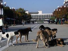 Защо преброяването на домашните кучета е важна стъпка в борбата с бездомните кучета?