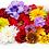 Thumbnail: The Karmic Flowers Attunement ~
