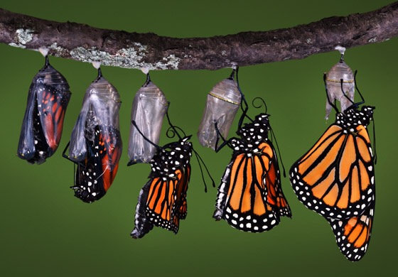 Self Transformational Symbols 1-6