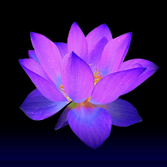 The Lotus Frequency Matrix Empowerment ~