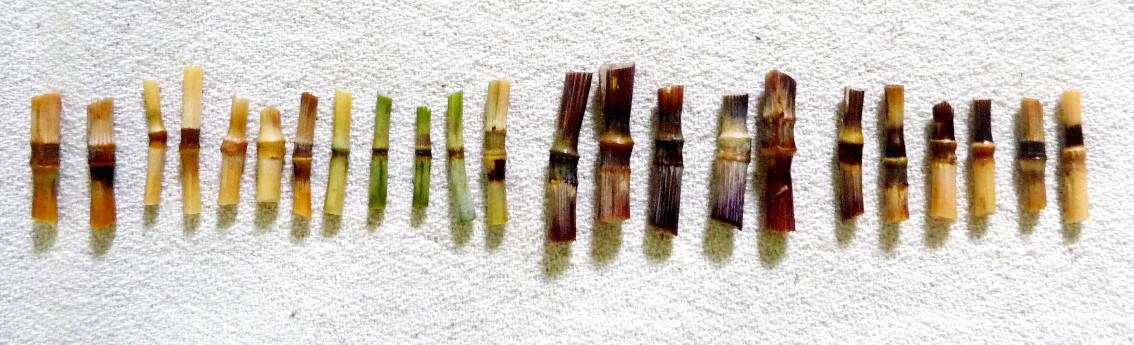 bles-noeuds-biodiversite-wheat-weaving