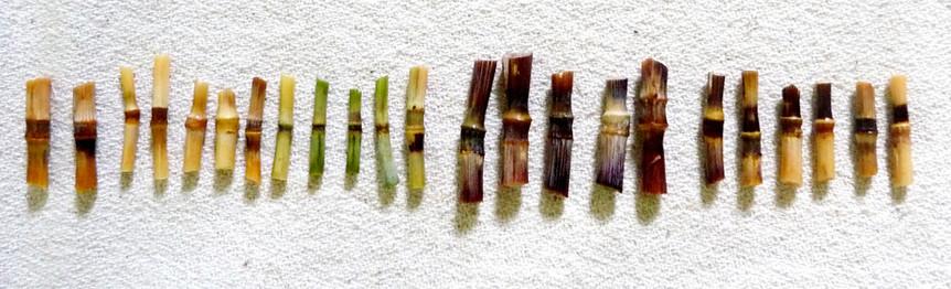 bles-noeuds-biodiversite-wheat-weaving