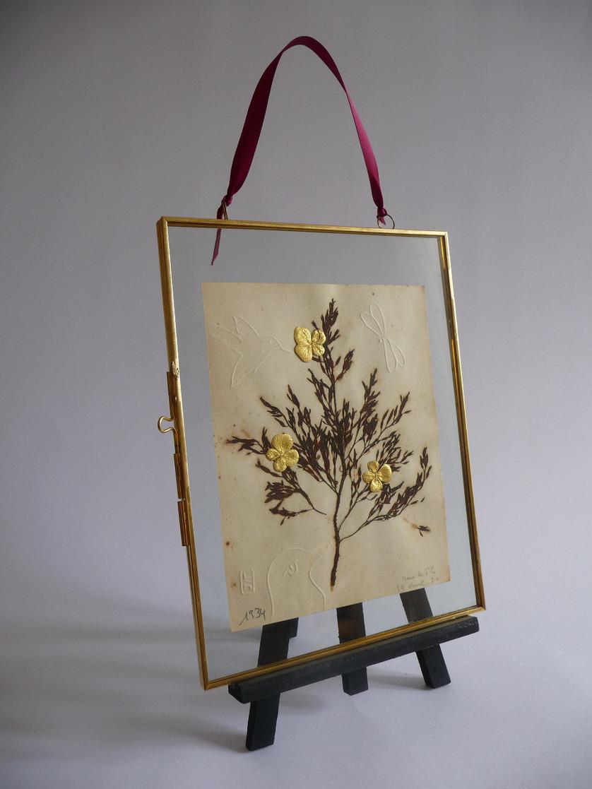 serie-anima-atelier-or-cadre-herault-vegetaux-dores