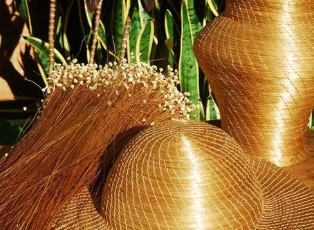 Capim dourado, l'herbe dorée du Brésil