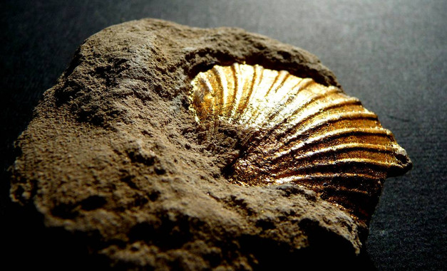 fossile-dore-or-cadre-lodeve