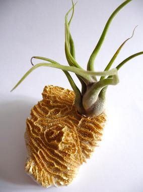 jardin-de-poche-tillandsia-corail-or-cadre
