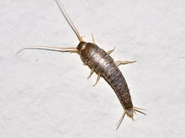 Silverfish control Wanneroo and surrounds