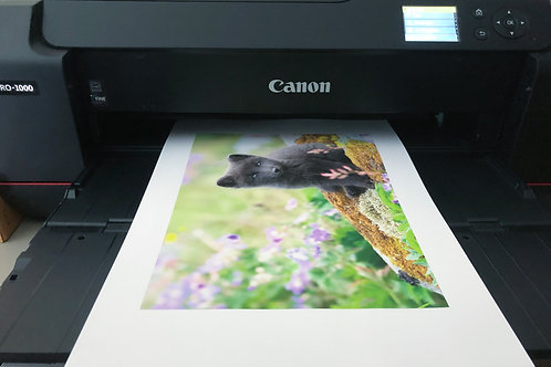 Printing - Panoramic Sizes