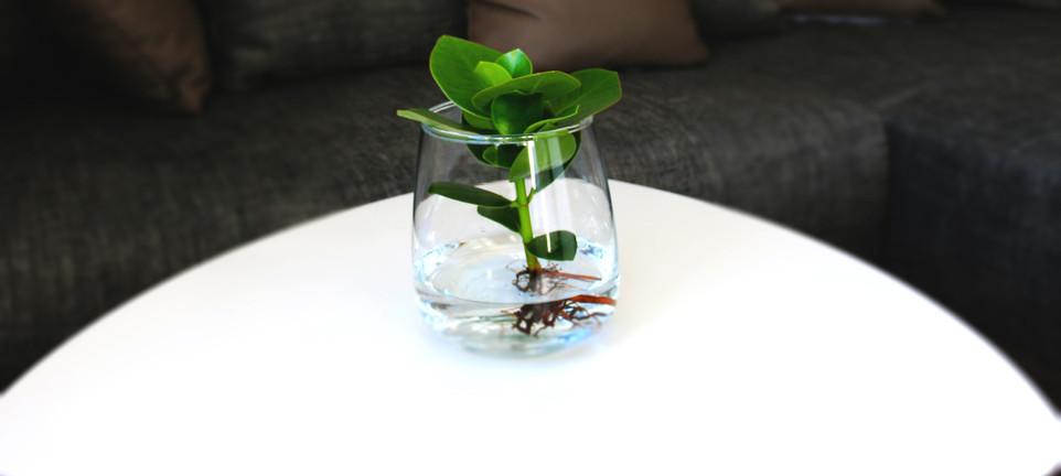 Couchtisch mit Pflanze