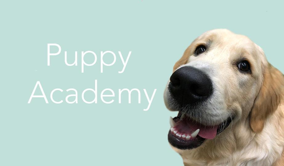 Puppy Academy.jpg